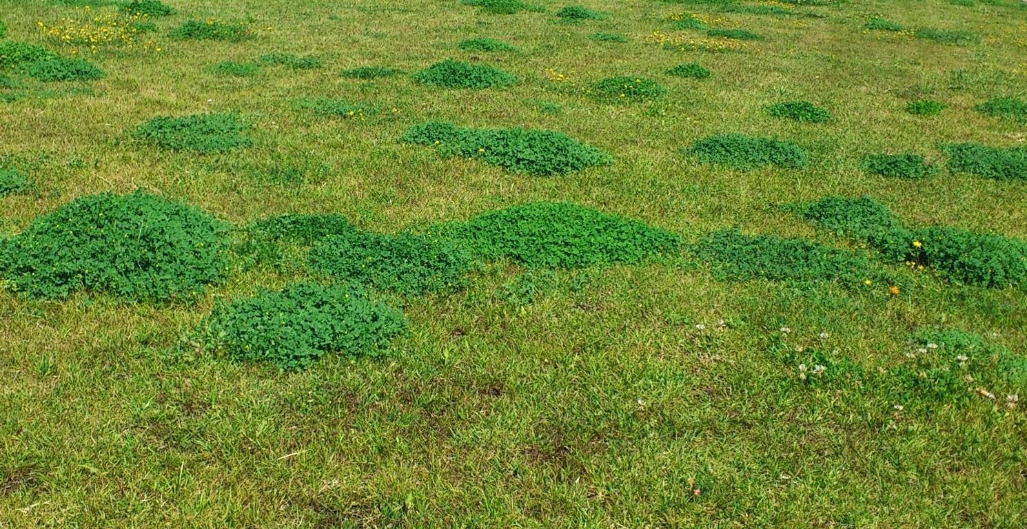 Malas hierbas for Como evitar que salga hierba en el jardin
